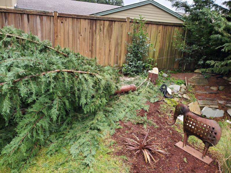 Small tree removal