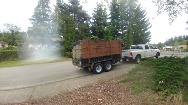 Small Tree Removal Tacoma