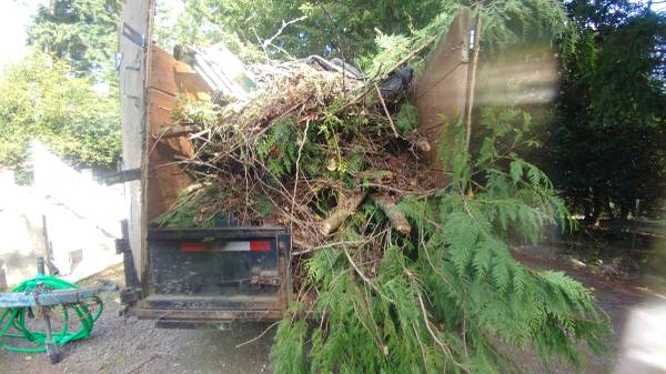 Loaded up yard waste from a Tree removal job.